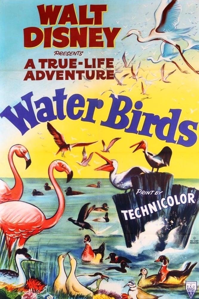 Aves Aquáticas