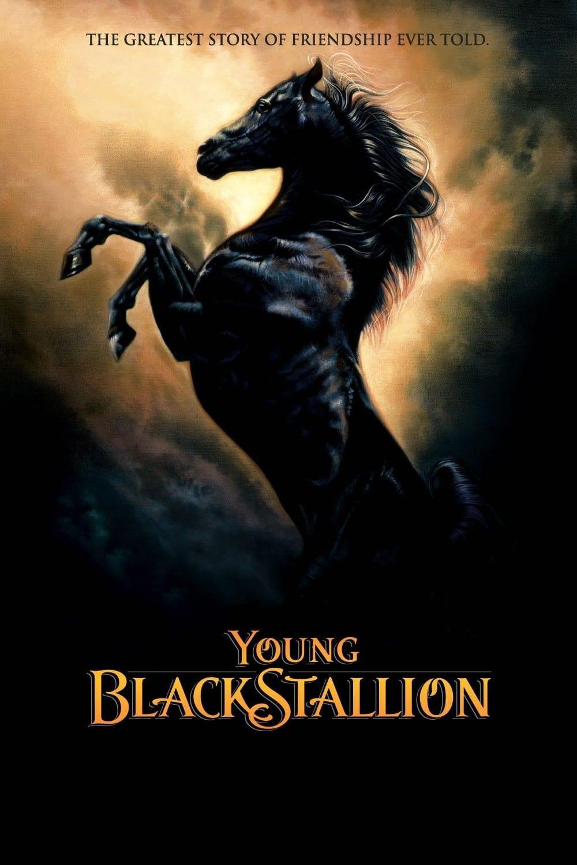 Shetan, el caballo del desierto