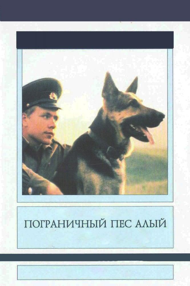 Border Dog Scarlet
