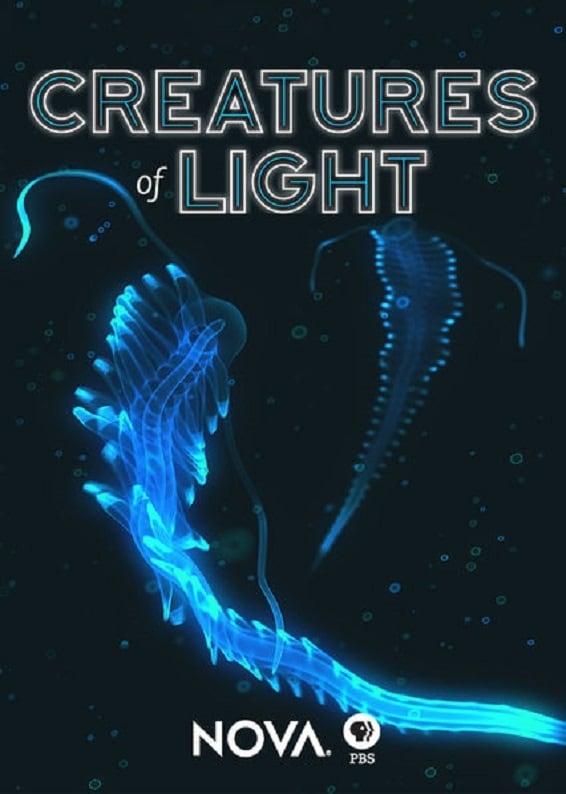Le monde fascinant des créatures lumineuses