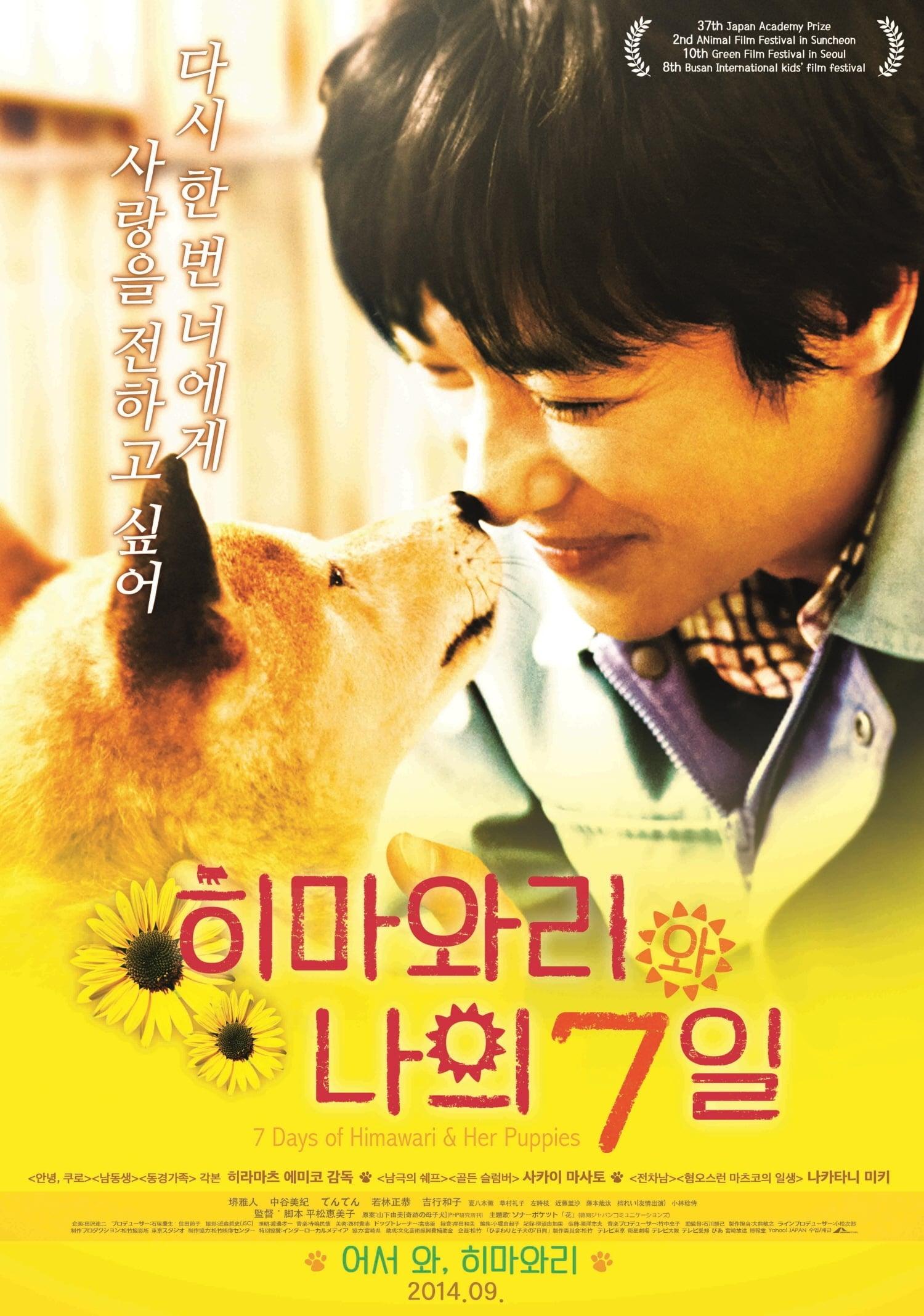 7 Days of Himawari & Her Puppies