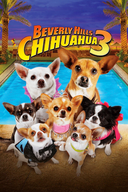 Un chihuahua en Beverly Hills 3: ¡Que viva la fiesta!