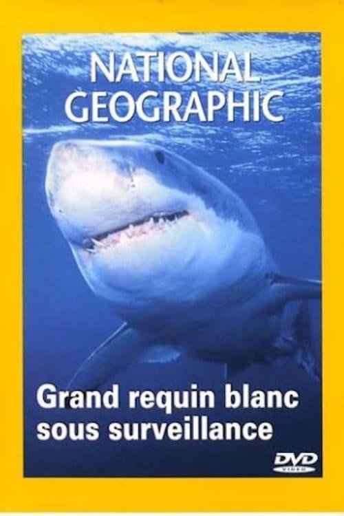 National Geographic : Grand requin blanc sous surveillance