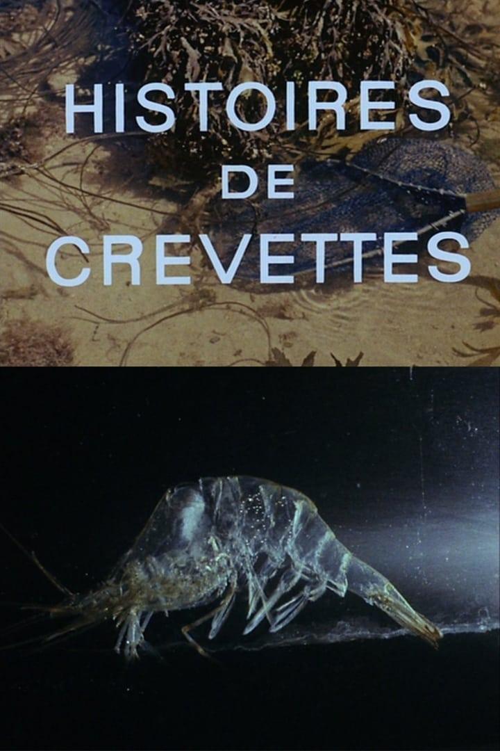 Shrimp Stories