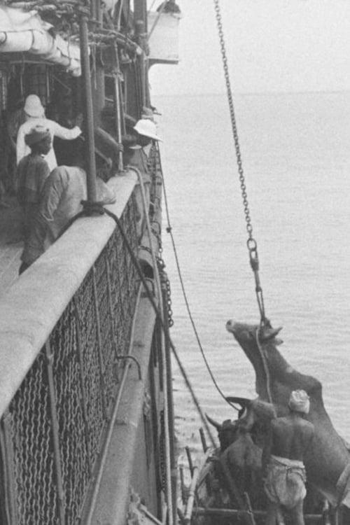 Embarquement d'un bœuf à bord d'un navire