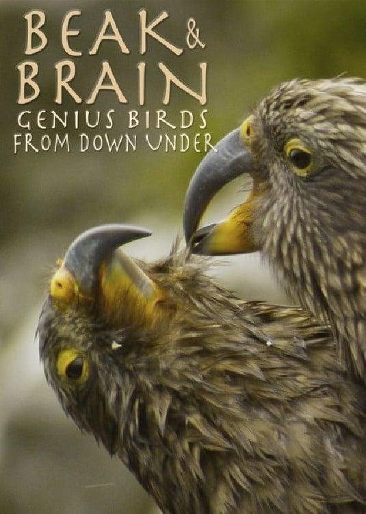 Beak & Brain