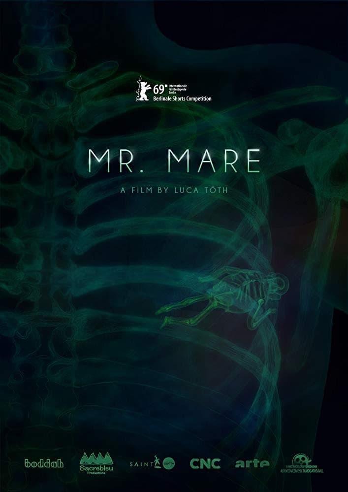 Mr. Mare