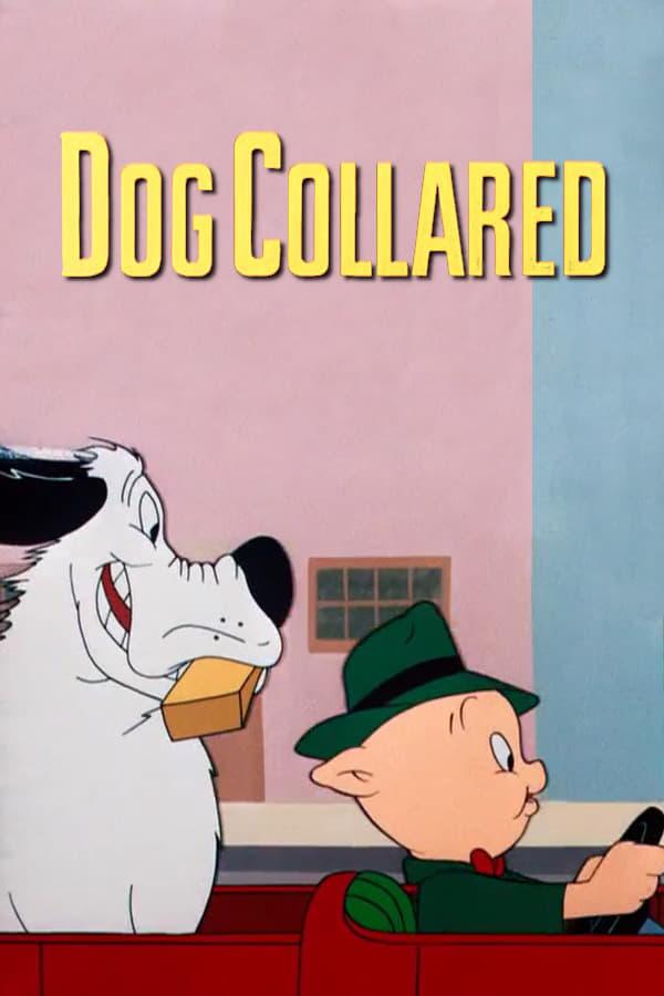 Dog Collared