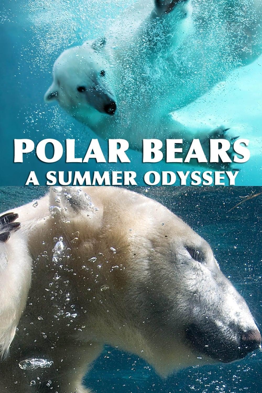 Ursos Polares: Uma Odisséia no Verão