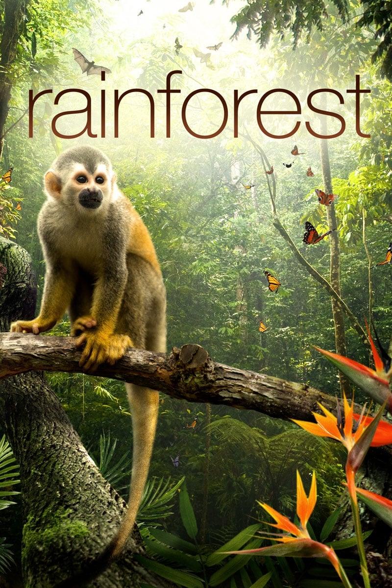 Secret Life of the Rainforest