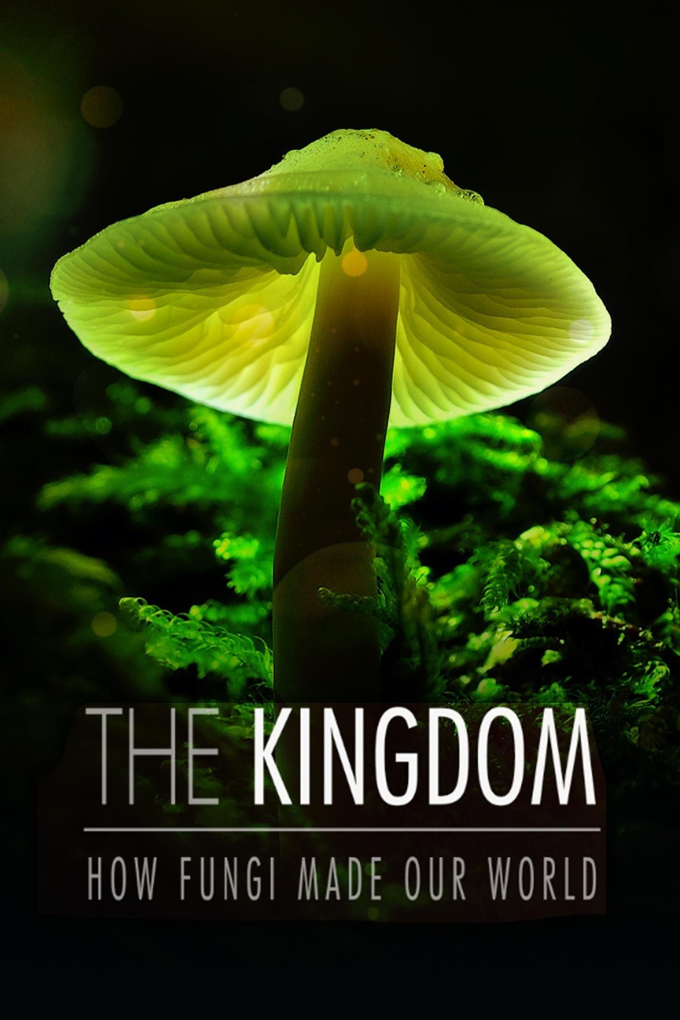 Im Königreich der Pilze