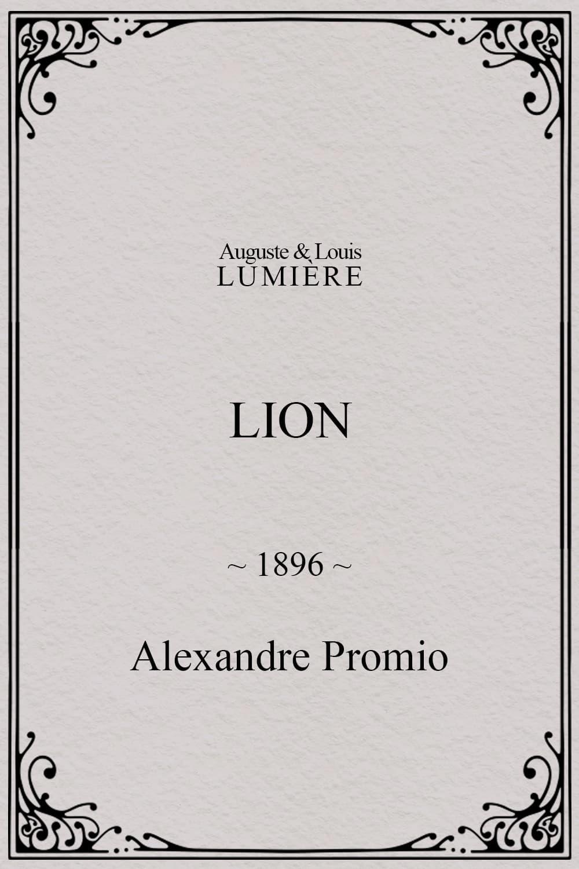 Lion, London Zoological Gardens
