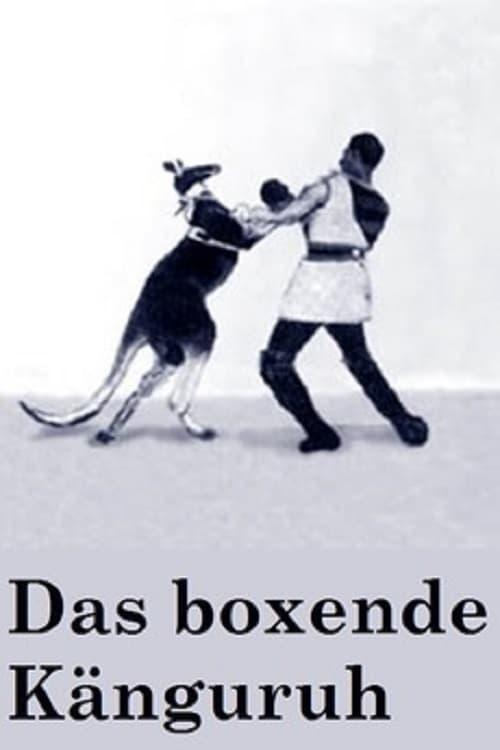 The Boxing Kangaroo