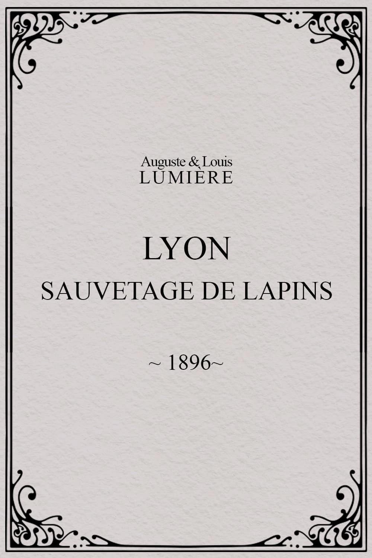Lyon : sauvetage de lapins