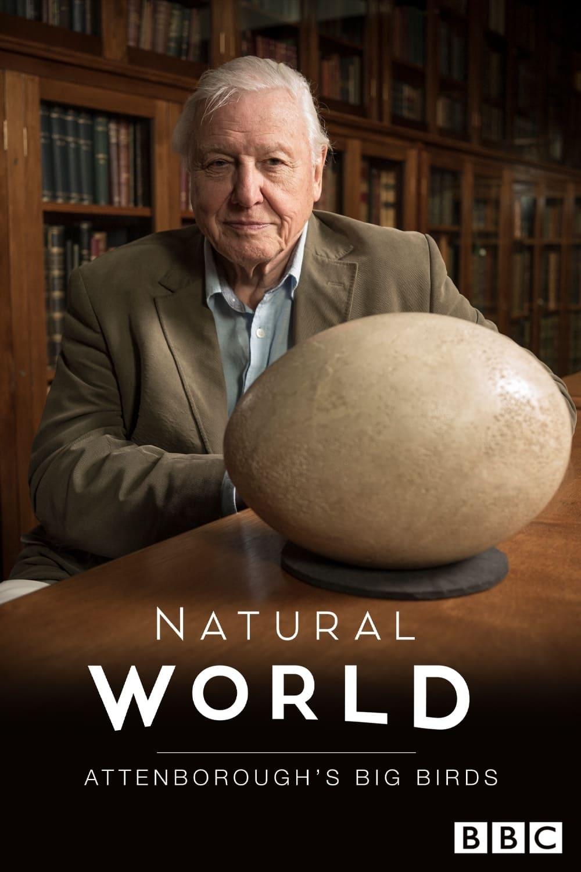 Attenborough's Big Birds