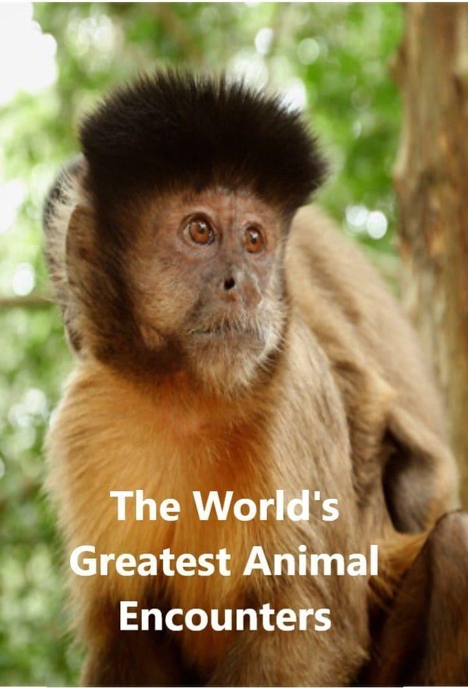 World's Greatest Animal Encounters