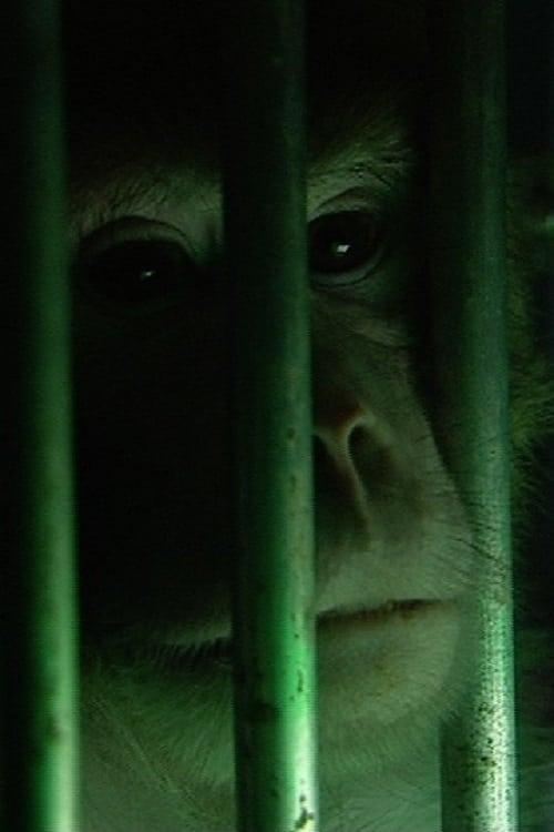 Monkeys, Rats and Me