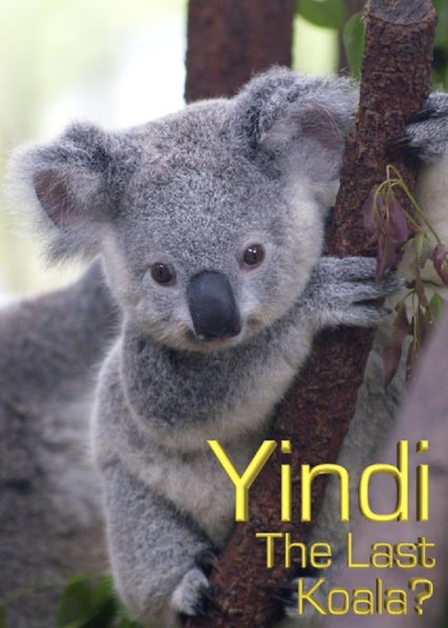 Grainger's World: Yindi: The Last Koala?