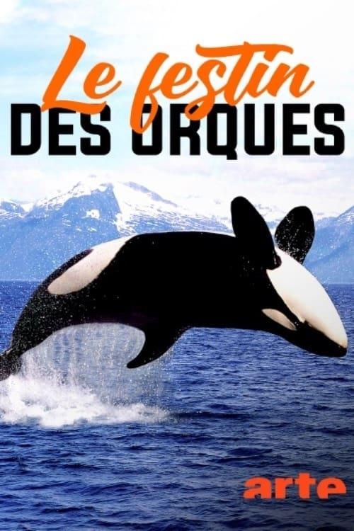 Norvège : le festin des orques