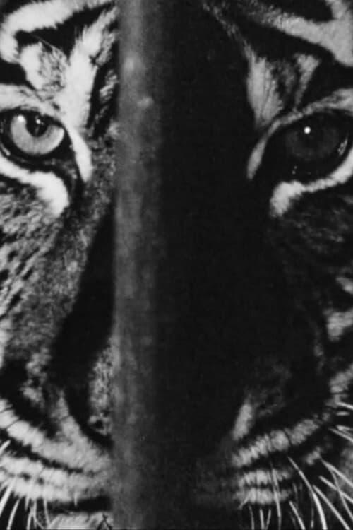 Marguerite Duras in the Lions' Den