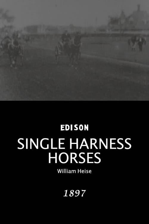 Single harness horses