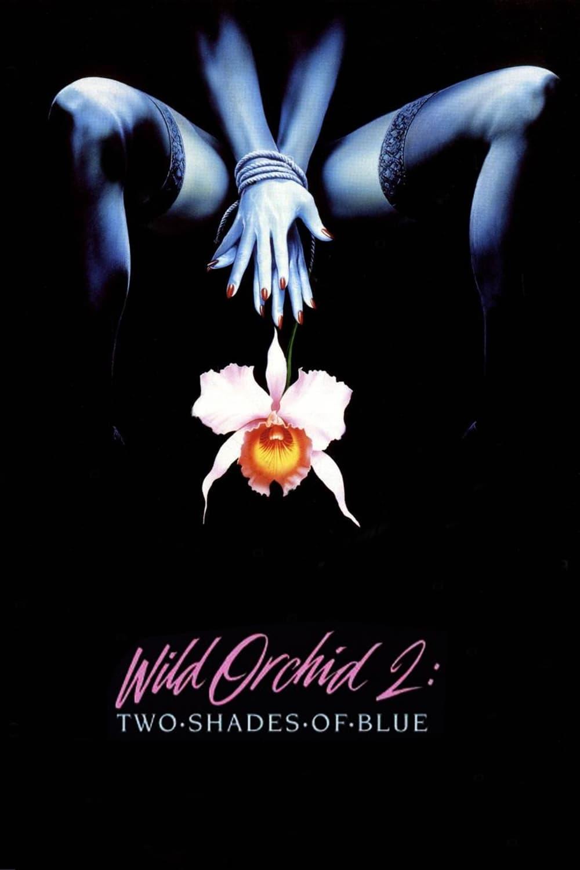 Wilde Orchidee II.